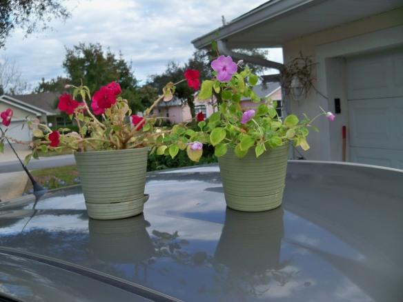 Granddaughter's Winter Plantings
