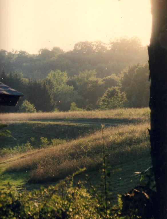 Mellow Sunlight--photo by Jane E. Schneider