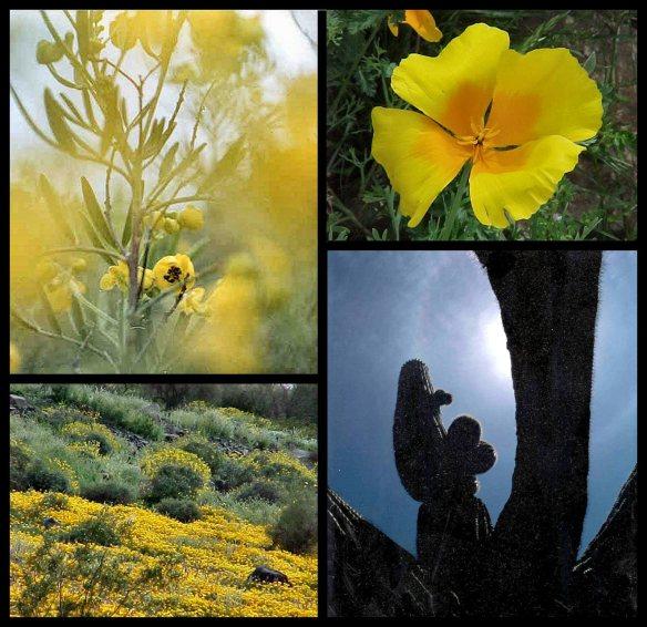 Springtime on the Sonoran Desert