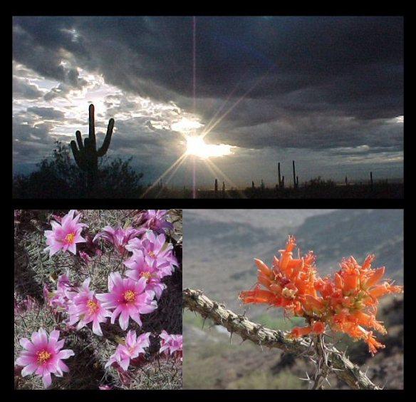 Desert storm, springtime blooms