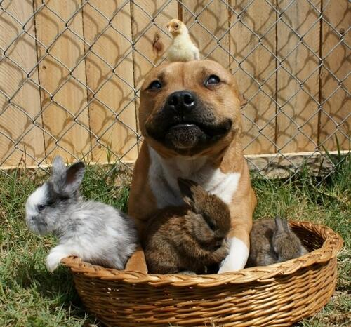dog chick bunnies