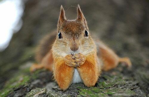 gossip time squirrel
