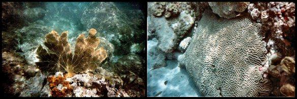 Corals, Soufriere Bay, St. Lucia