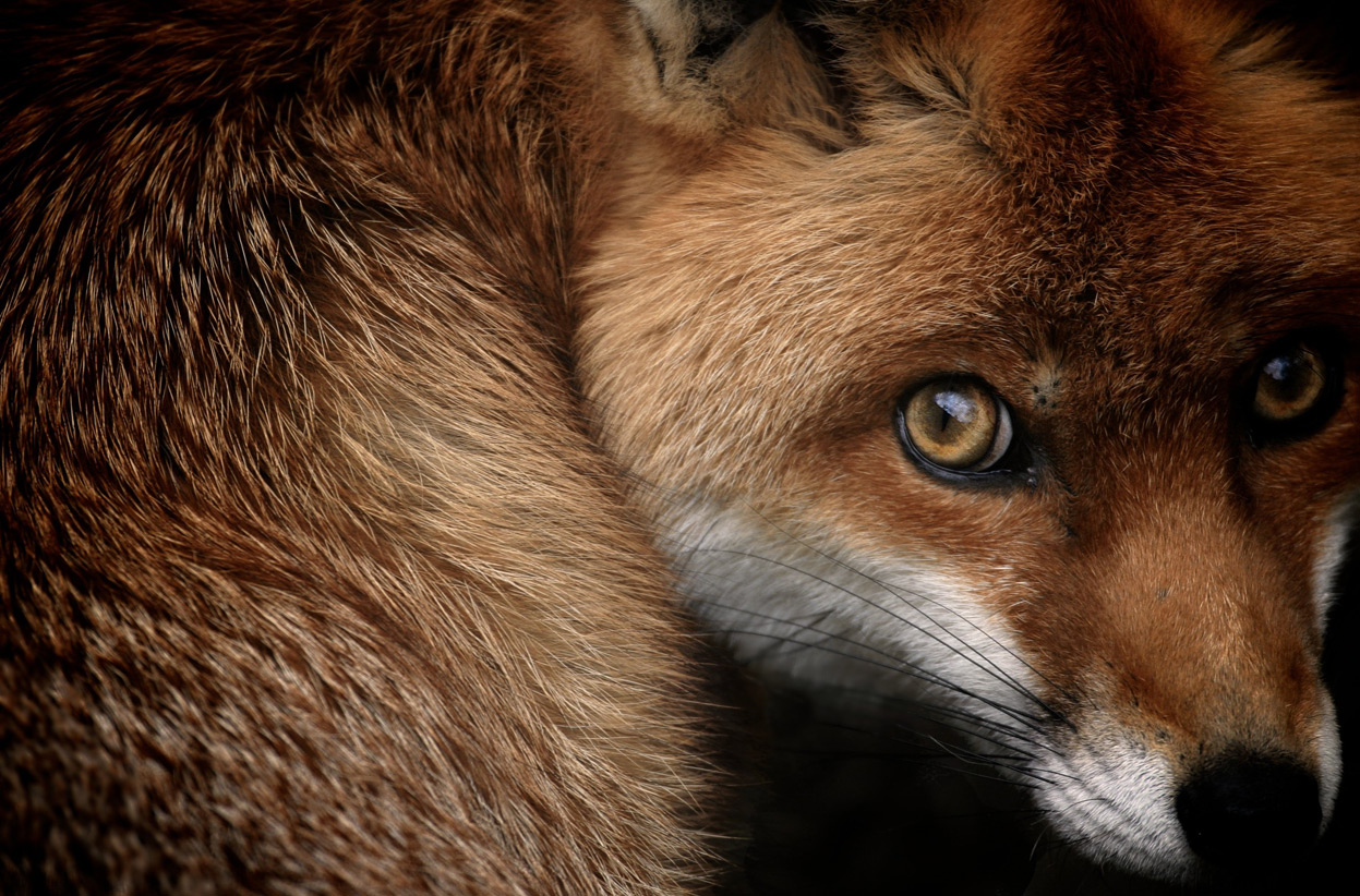 Photo Copyright Sam Morris, 2013 National Geographic Photo Contest entry