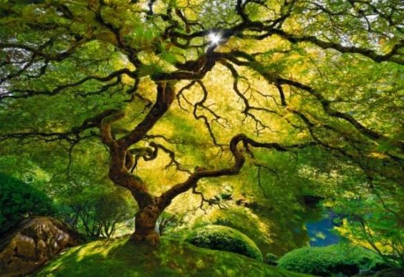 Japanese Maple Tree, Oregon, USA Photo by Peter Lik