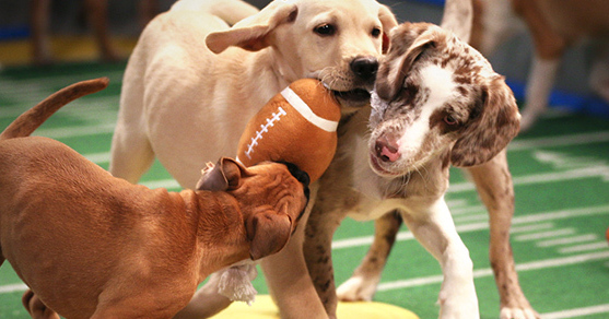 Puppy Bowl X pre-game warmup (photo credit: DCL)
