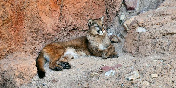 Puma 2