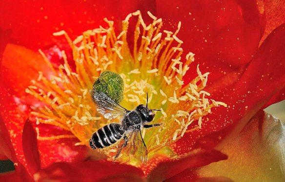 Bee-1 DG 2014