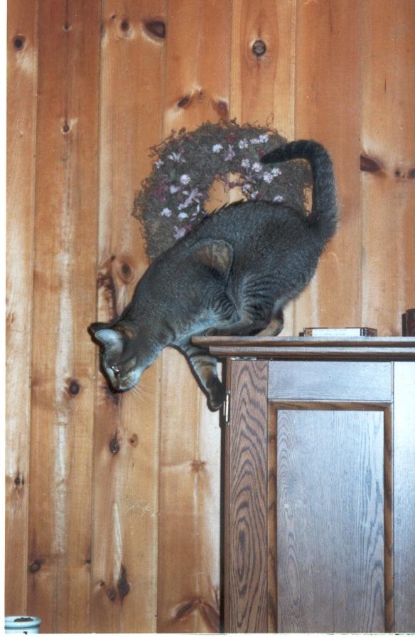 Becca prepares to leap.