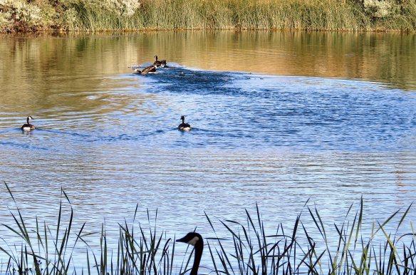 Hollydot pond 134