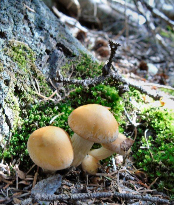 Mushrooms -- not edible, but a start!