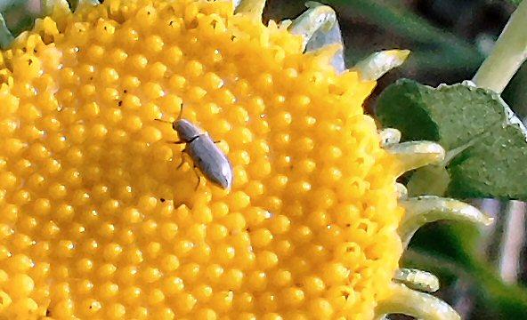 Happy Bug 301
