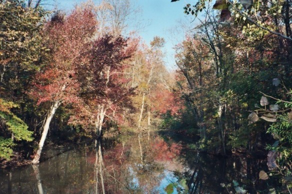 river through The Great Swamp