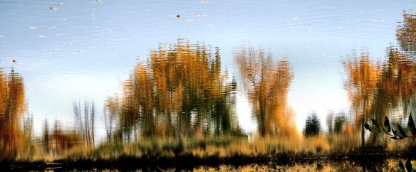 Inverted Reflections 627
