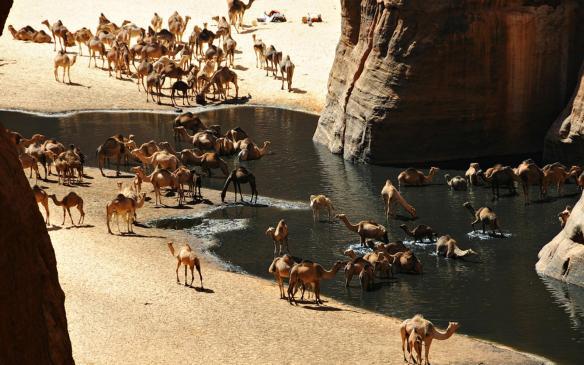 oasis_in_the_sahara_desert_wallpaper