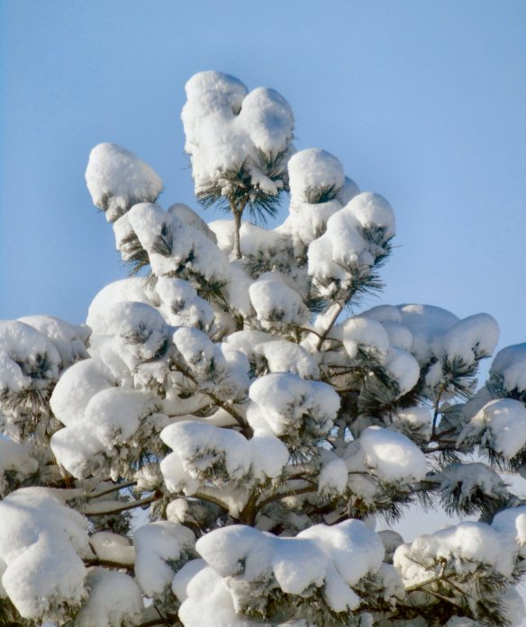 Snow scene 917