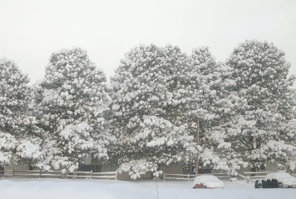 Snowy day 909