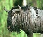 Breaking Gnus