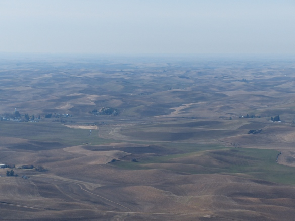 View of the rolling hills of the Palouse, from Steptoe Butte, WA