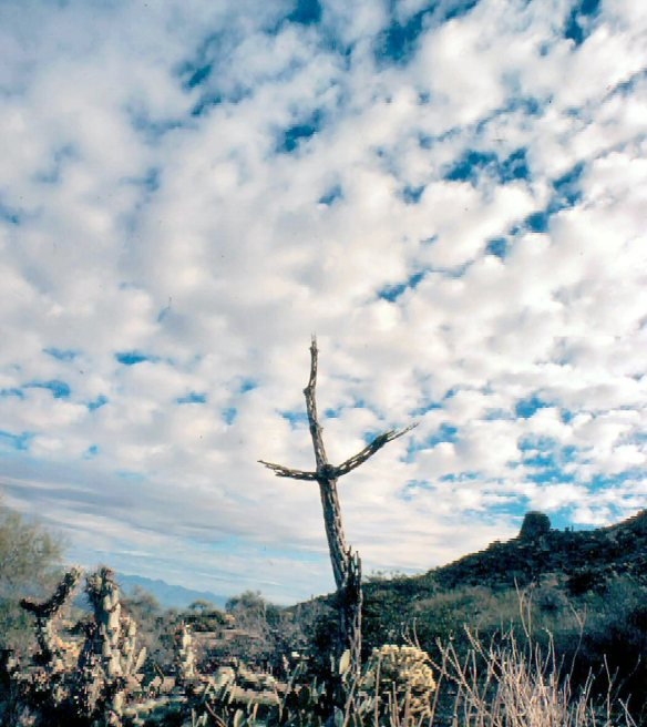 Cholla skeleton feb 1978 001