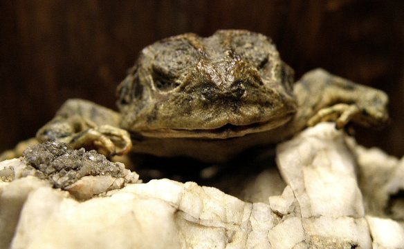 Cruz, aka the mummified frog
