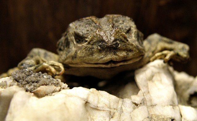 Cruz, aka the mummified frog