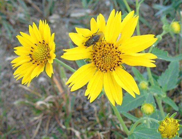 Sep 6 bug on wildflower 1806