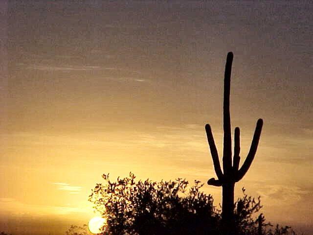 Nov 2001 Desert Sunrise