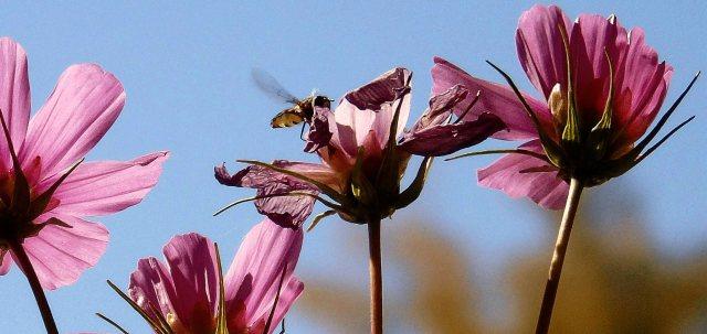 11-2 buzzer in flowers cr 2073