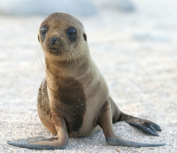 sea_lion a to z animals