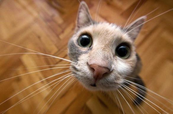 upclose kitty amolife com