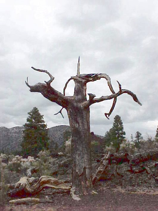 1999-july-sunset-crater-snag