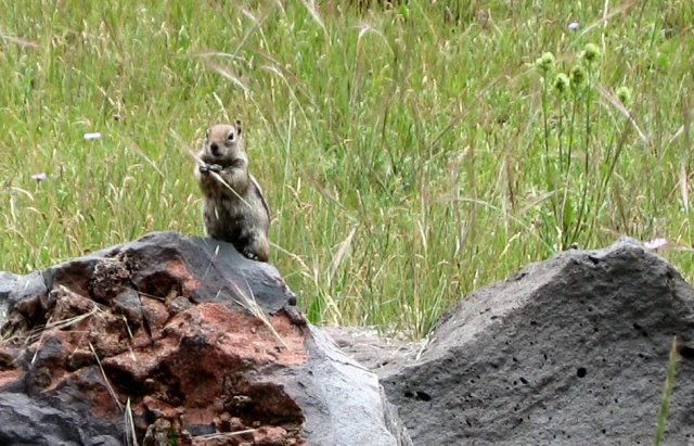 2007-july-butterfly-cienega-chipmunk-0430