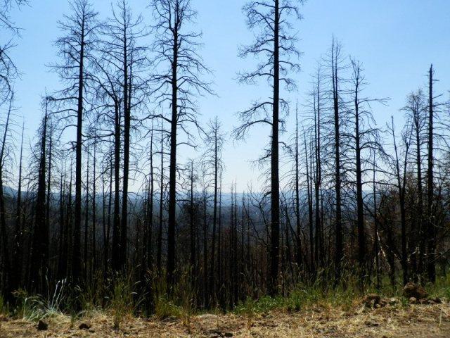 bear-wallow-fire-aftermath