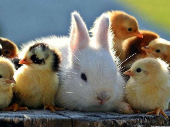 bunny and chicks